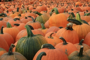 Pile of Pumpkins SEPpics